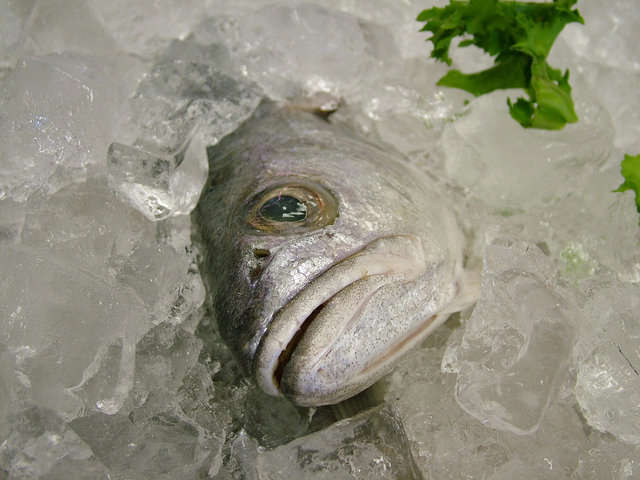 fresh-fish-1-1509945-640x480